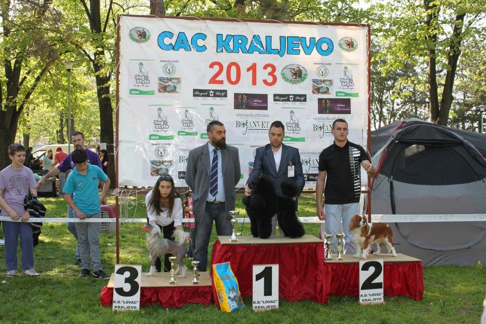 CAC Kraljevo 2013.